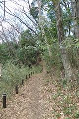 鴨居原市民の森(サクラ道、Kamoihara Community Woods)
