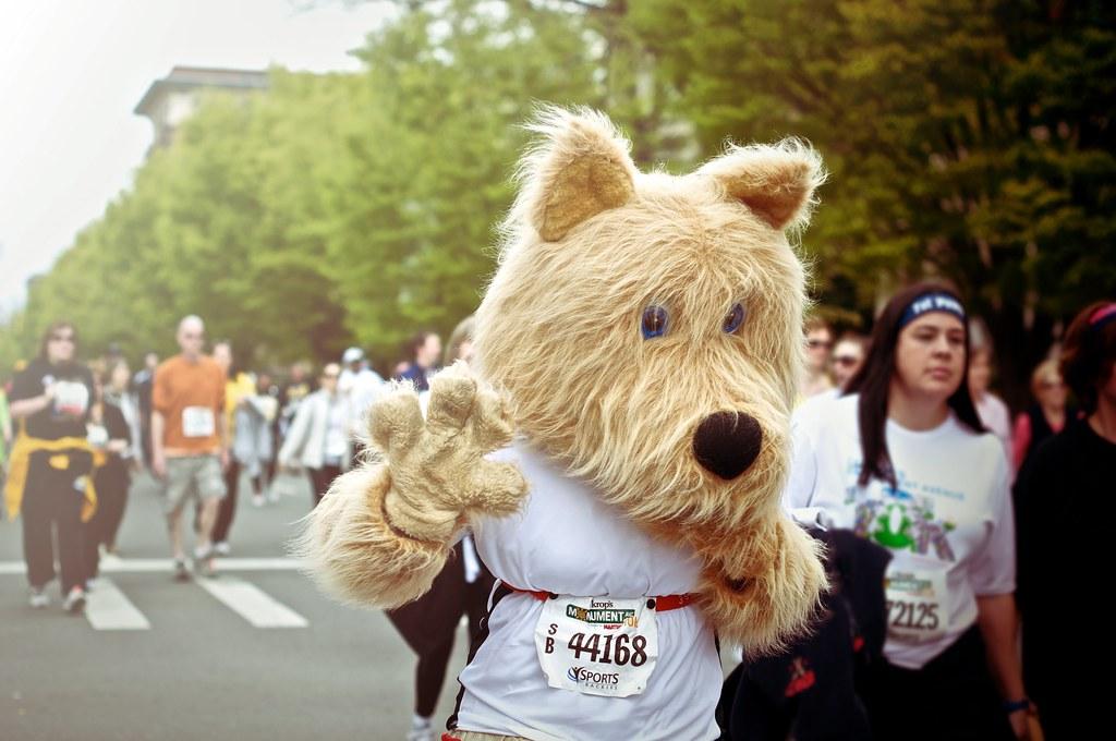dog costume runner