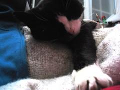 78/365 cat on lap