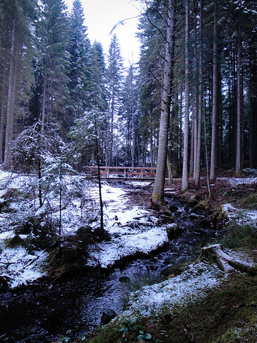 black forest streams.