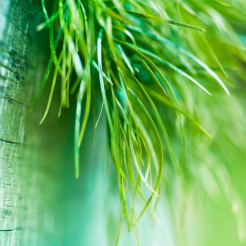 Macro / Grass por ►CubaGallery