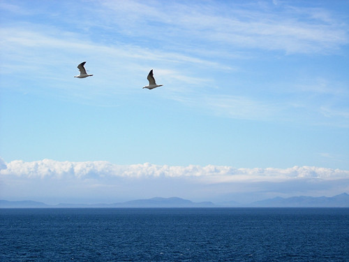 Birds-Outer-Hebridies-in-the-distance