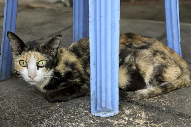 skinny kitty