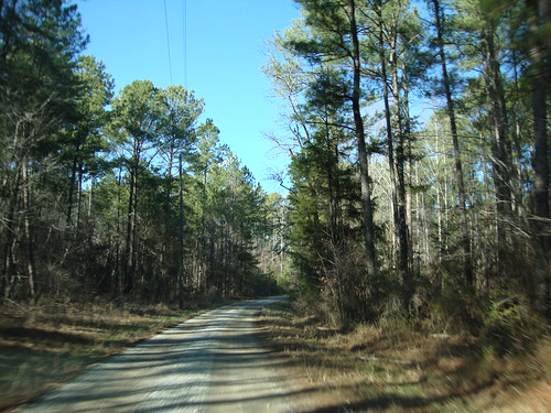 Forest Road, Winston County AL