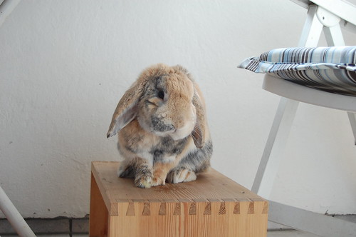 sitting on the wooden stool