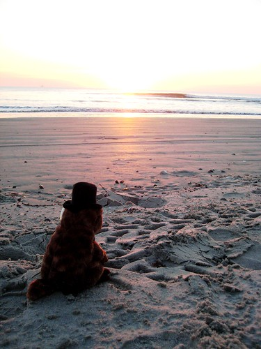 BB Groundhog Enjoying Sunrise, Cocoa Beach, Fla.