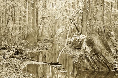 swampsep1f