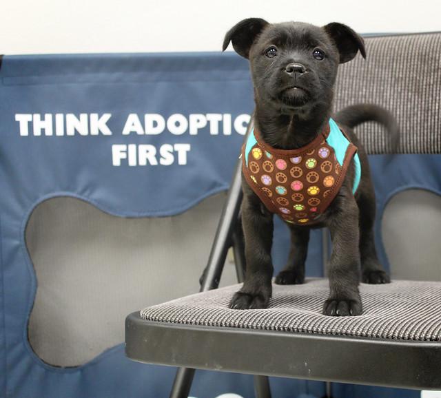 Site Pup Mickey @ 9 weeks