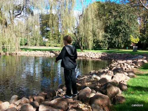 Feeding the Ducks - Castlemaine Botanic Gardens