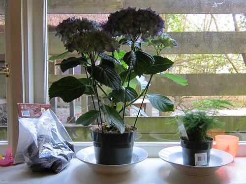 Bulbs & Plants & Such