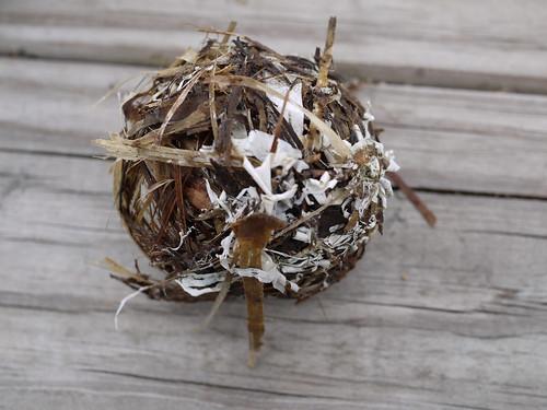 Nest exterior