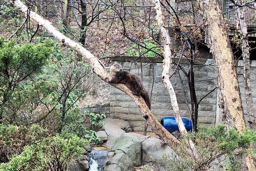 River Otter 20110430_7