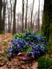 O caciula de flori