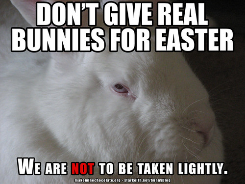 don't give real live bunnies for Easter