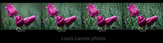 planche_fleurs_ouverture4