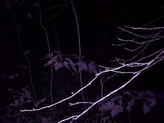 IR Forest Shot