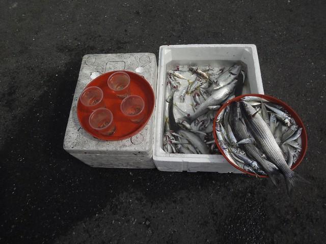 Peixes pescados na Ponte Gálata em Istambul