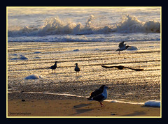 Seagulls At The Beach As The Sun Begins To Set