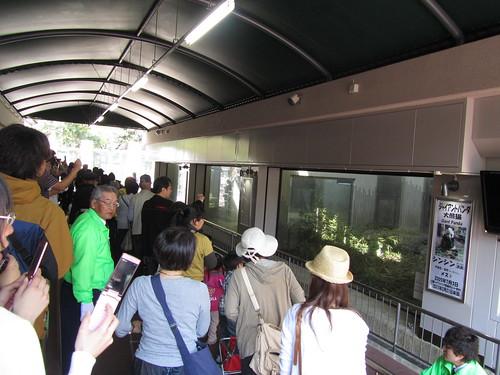 Giant pandas exhibition