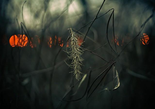 11x14 grass at dusk
