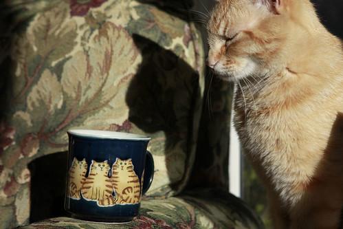 cat mug shot 2