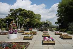 江の島めぐり―サムエル・コッキング苑の花壇(Flower garden at Samuel Cocking garden, Enoshima, 2011)