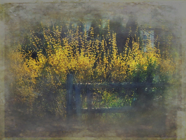 yellow fence 2