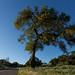Foxen Canyon Road 2
