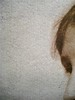 "Quentin Bell, Virginia Woolf, mia zia, La tartaruga edizioni 2011; art director Mara Scanavino, alla cop.: ""Virginia Woolf ritratta da George Charles Beresford; cop. (part.), 8"