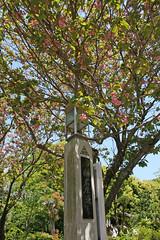 江の島めぐり―奥津宮の桜(Cherry Blossoms at Okutsumiya shrine, Enoshima, 2011)