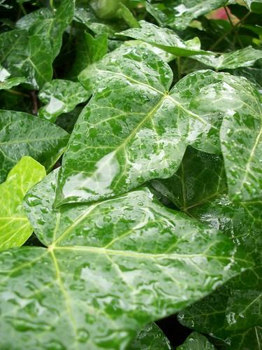 Ivy and Rain
