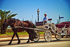 A Horse Drawn Carriage in St. Augustine, FL