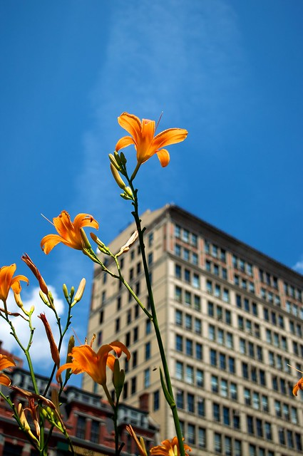 Flowers in the City