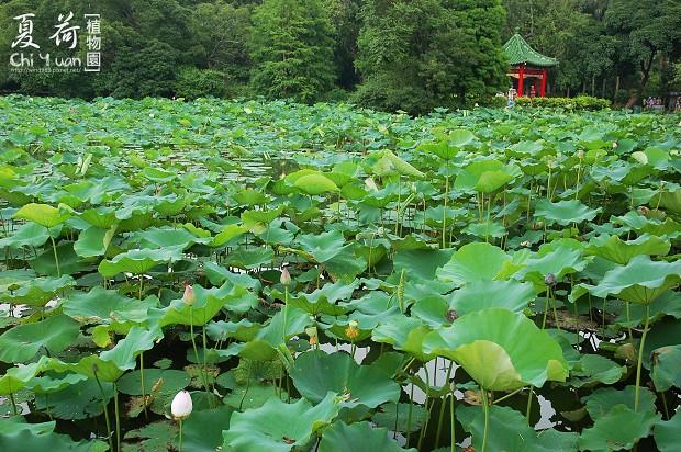 台北植物園03.jpg