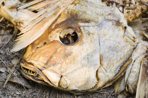 fishy1f