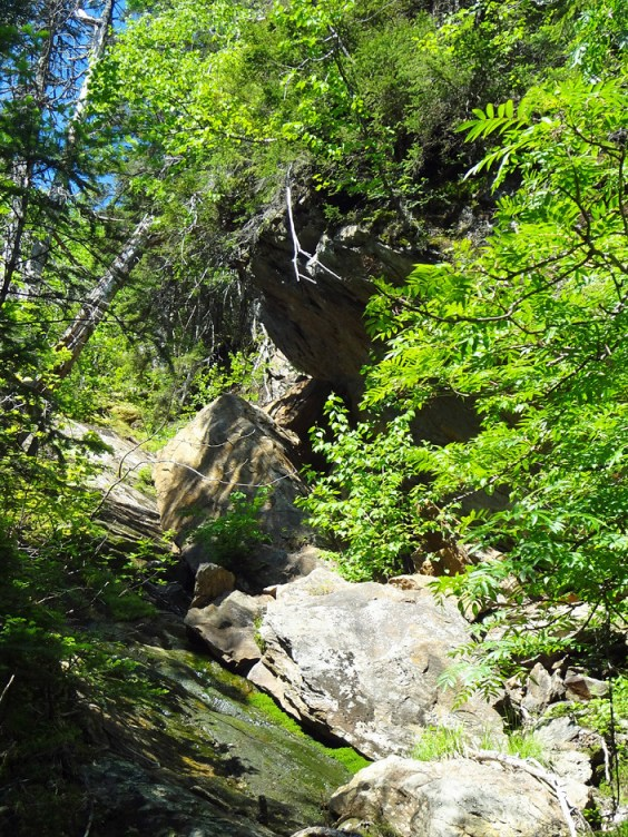 Wright Trail North Branch Stream