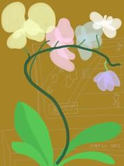 090511 Open Orchid 16E