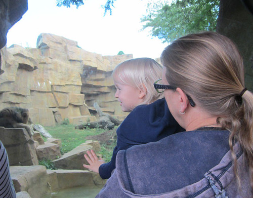 brookfield-zoo-2013-6.jpg