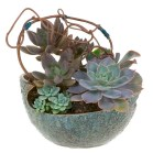 Succulents — Leanne and David Kesler, Floral Design Institute, Inc., in Portland, Ore.
