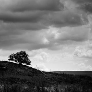 Árbol solitario II
