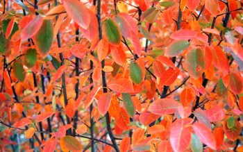 Fall Foliage — Photo by Sharon McGukin AAF, AIFD, PFCI
