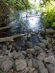 Tel Dan spring