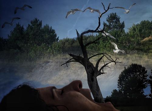 Surrealismo - de Myriam Amaro