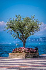 """Lazise 2016 • <a style=""""font-size:0.8em;"""" href=""""http://www.flickr.com/photos/58574596@N06/25305877789/"""" target=""""_blank"""">View on Flickr</a>"""