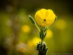 Yellow flower in september
