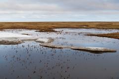 Tundra Landscape
