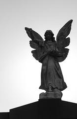 BW Angel