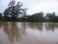 Kollibacchalu Dam -Malenadu Heavy Rain Effects Photography By Chinmaya M.Rao   (134)