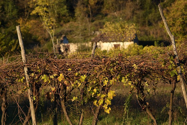 Magie d'autunno