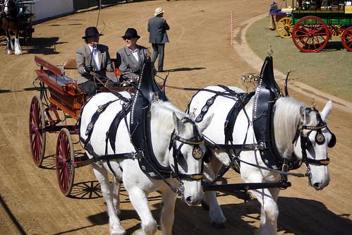 "Brisbane-Ekka-2014-Horse-and-Wagon <a style=""margin-left:10px; font-size:0.8em;"" href=""http://www.flickr.com/photos/118367855@N06/14912227142/"" target=""_blank"">@flickr</a>"